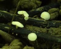 Champignon présent dans la litière ©Arnaud-Dowkiw-INRA