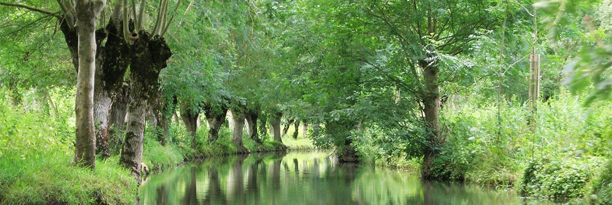 Une conche bordée de frênes : Paysage de marais mouillé dans le Marais poitevin