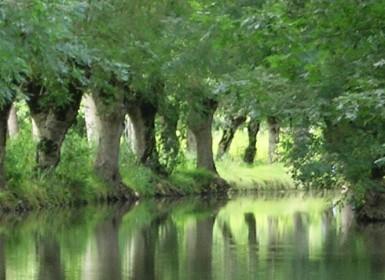 Conche bordée de frênes tétard dans le Marais poitevin