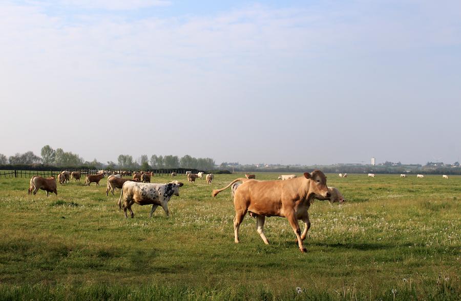 Marais communal Mouzeuil ©PNRMP