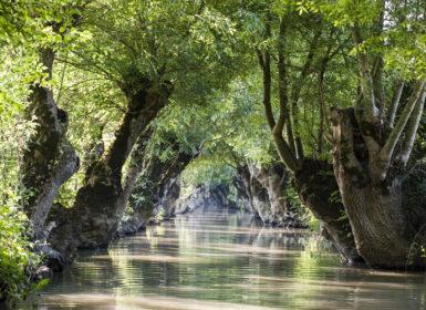 Conches avec arbres têtards dans les marais mouillés du Marais poitevin